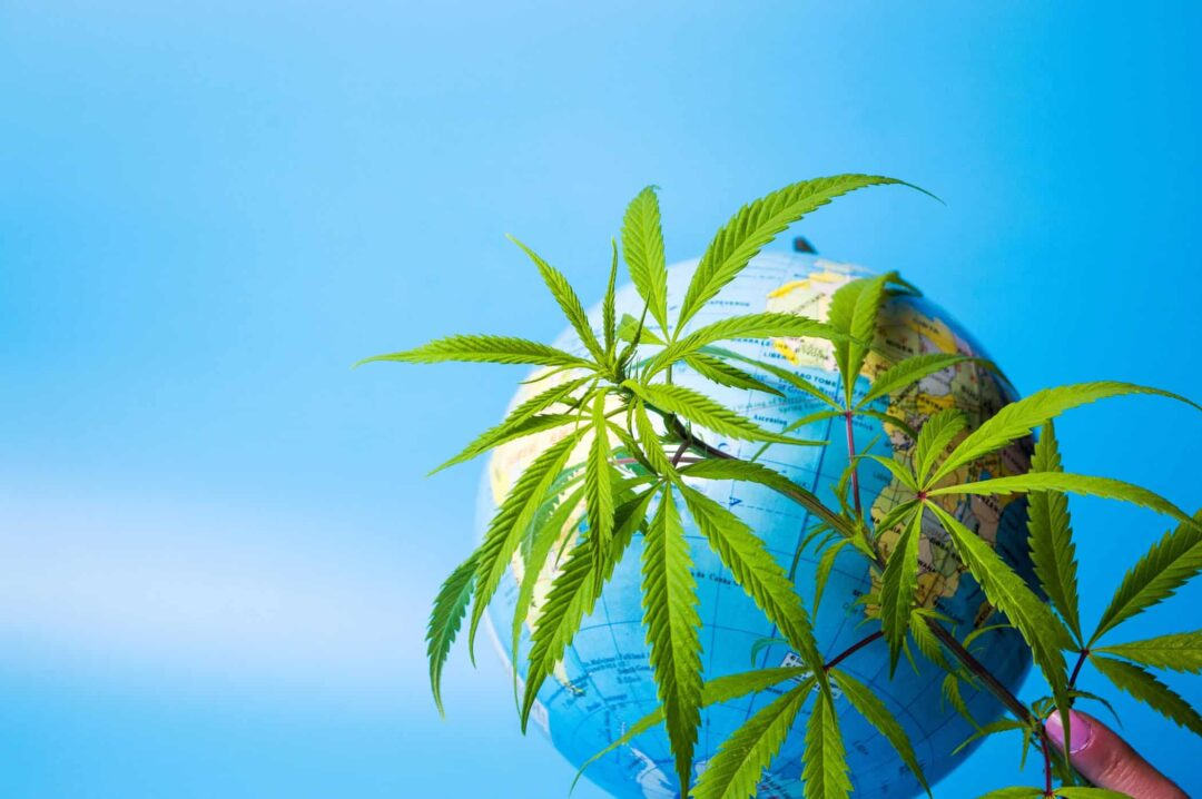 shipping policies - Marijuana leaf in front of a globe against blue background